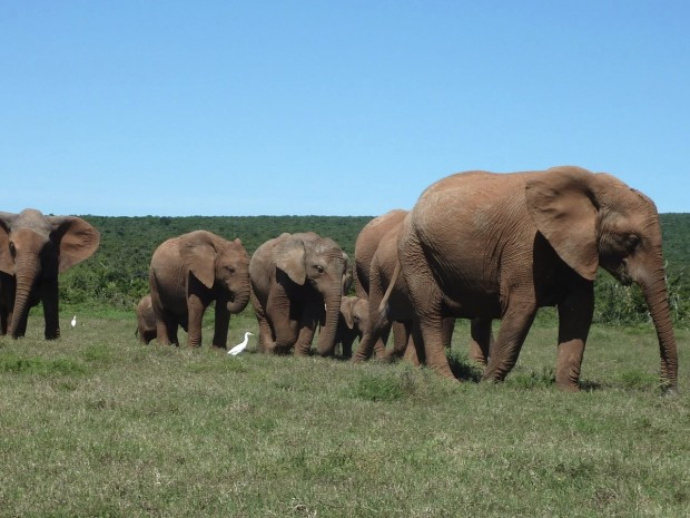 Port Elizabeth and Addo Elephant National Park in South Africa