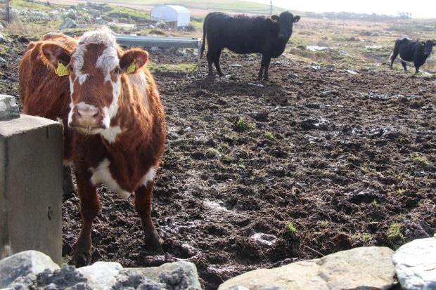 Exploring Ireland's Rugged West Coast