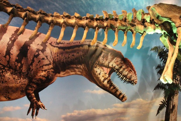Ultimate Dinosaurs at the ROM