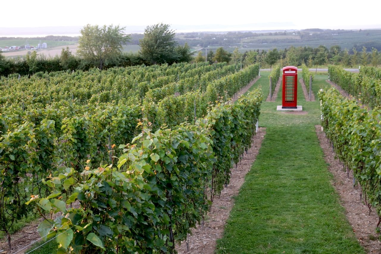 Luckett Vineyard's iconic red phone booth.