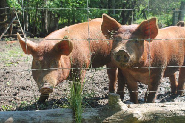 Visit the Viamede Resort organic farm.