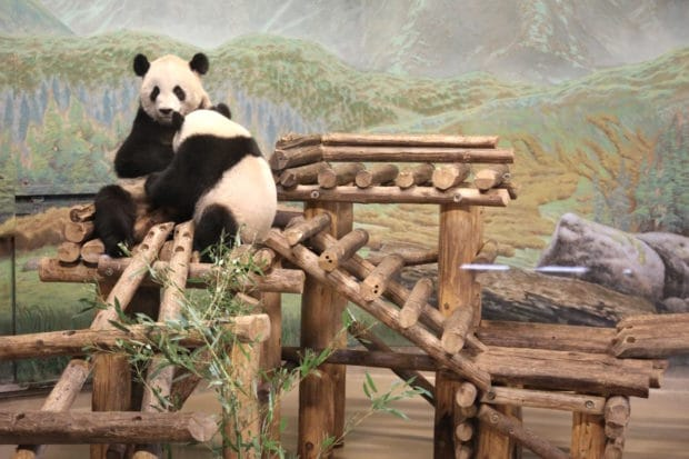 Plan Your Very Own Adults Only Photo Safari at Toronto Zoo