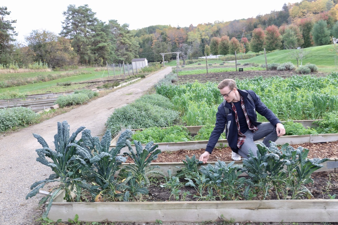 The herb and vegetable garden at Hockley Valley Resort.