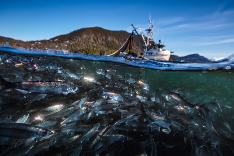 Netflix's latest nature documentary offers jaw-dropping visuals.