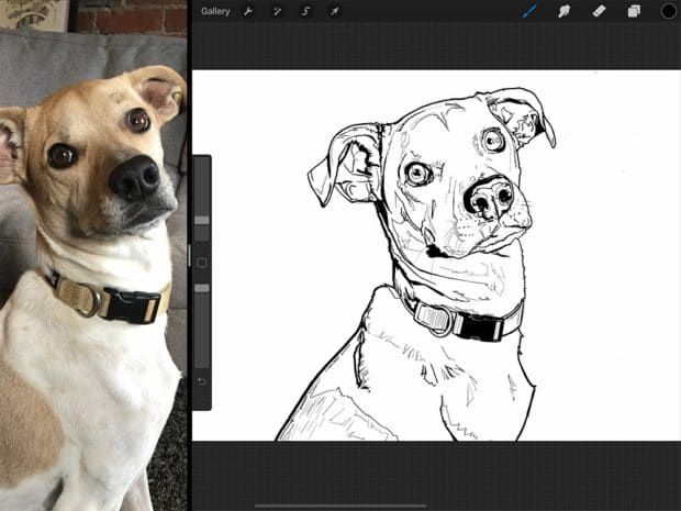 Drawing a dog portrait on iPad Pro is surprisingly intuitive. It feels very much like drawing with pen and paper.