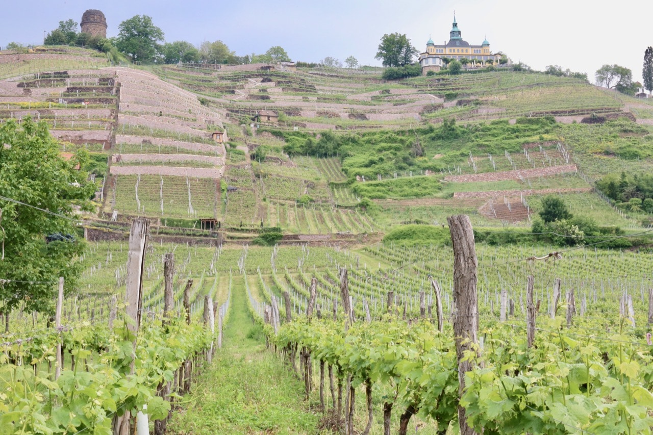 Saxony's best wineries are located a short tram ride from downtown Dresden.