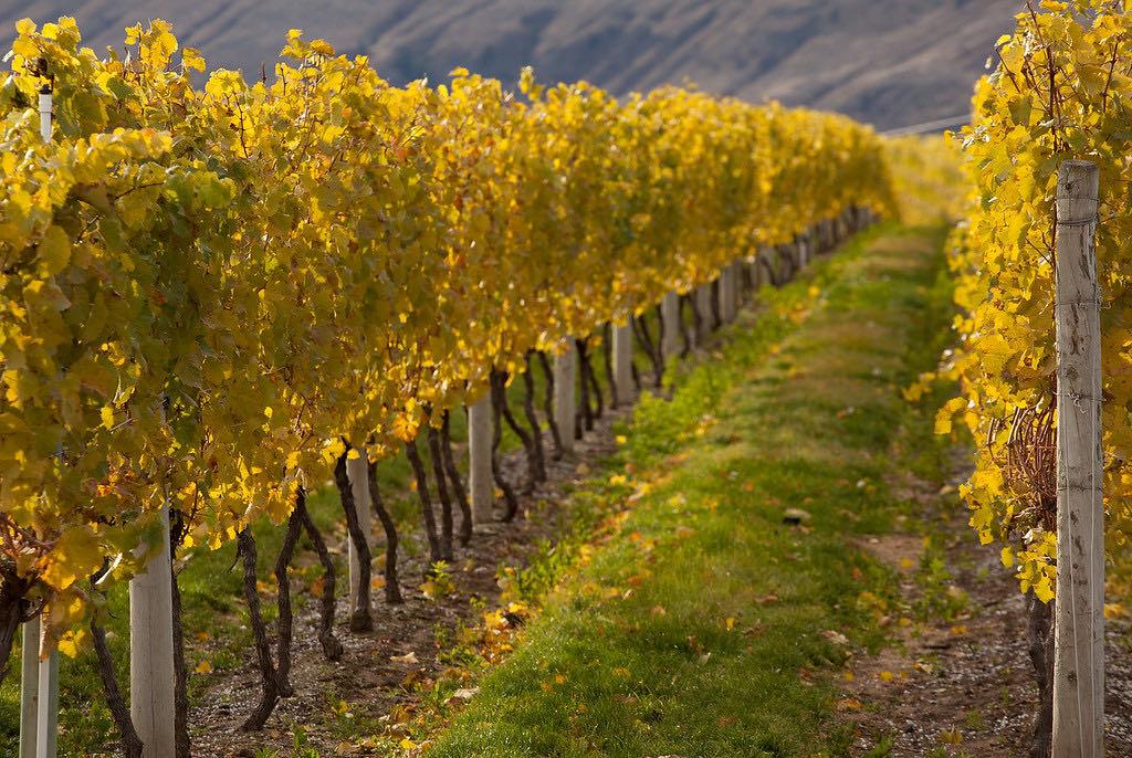 Wineries on Vancouver Island: Alderlea Vineyards is located in the heart of Cowichan Valley.