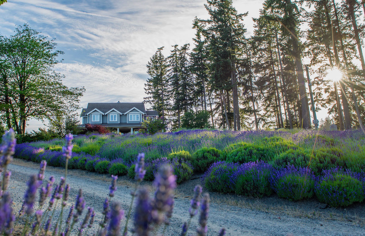 Damali Lavender & Winery is perfect for perfume fans on a road trip of Vancouver Island.