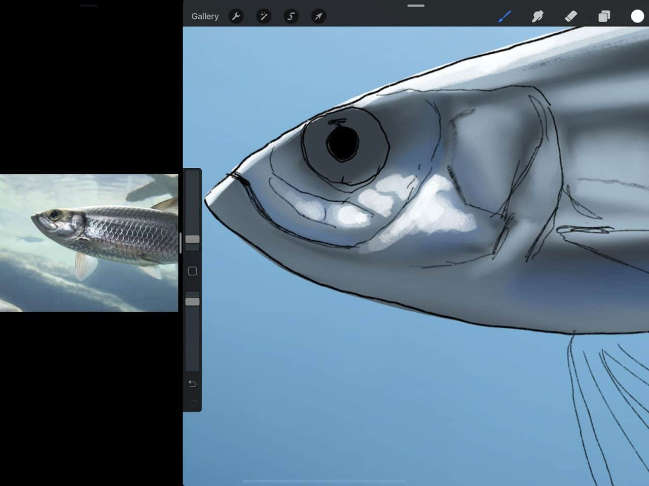 How to Draw A Fish: Highlights make for a more compelling illustration