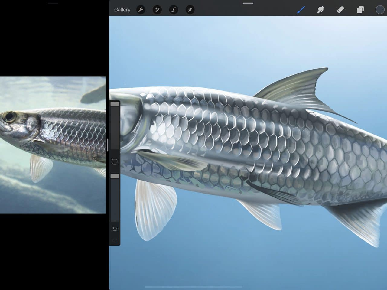 How to Draw A Fish: Attention to fine details make for more lifelike drawings