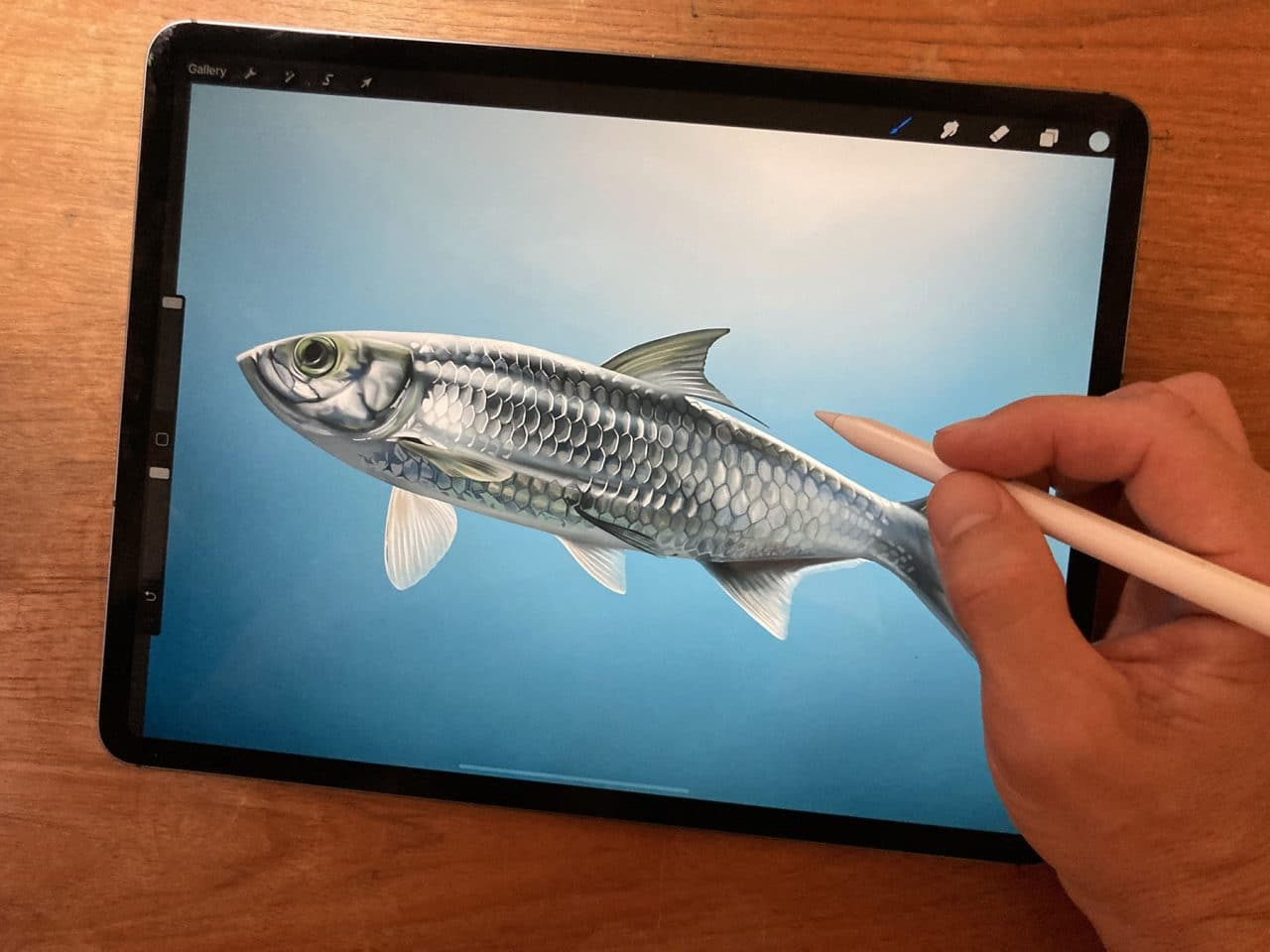 Learn the process of digitally drawing a fish with Procreate on iPad Pro