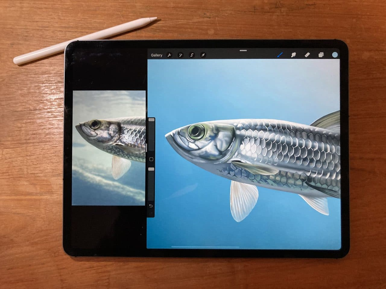 Learning how to draw a fish from a reference photo is easy with Procreate on iPad Pro